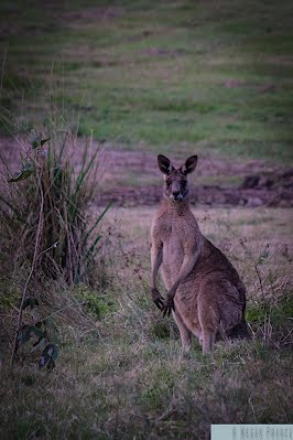 20120609_MP_Skippy